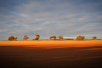 Sunrise on the Mallee, Victoria