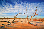 Dead trees on a Mallee salt pans on sunrise, Victoria