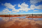 Mallee after rains, Victoria