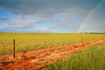Rainbow over Mallee crop, South Australia