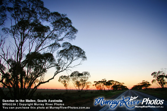 Sunrise in the Mallee, South Australia