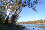 Murray River at Coomealla, Dareton, New South Wales