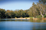 Murray River reserve opposite Tocumwal