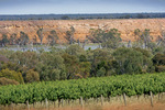 Vineyards and Cliffs, Blanchetown, South Australia