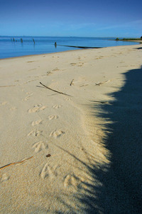 Footprints at Lake Albert, Meningie