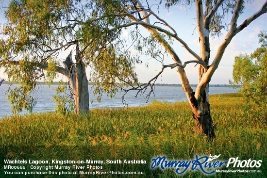 Wachtels Lagoon, Kingston-on-Murray, South Australia