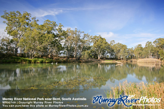 Berri Australia  City new picture : Murray River National Park near Berri, South Australia