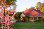House and Blossoms in Mulwala