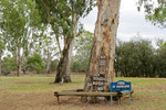 Tree of Knowledge at Loxton flood markers