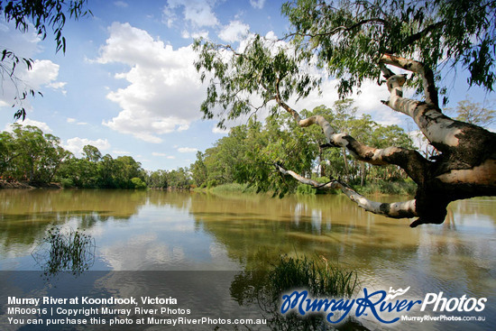 Murray River at Koondrook, Victoria