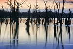 Sunrise at Wachtels Lagoon, Kingston-on-Murray, South Australia