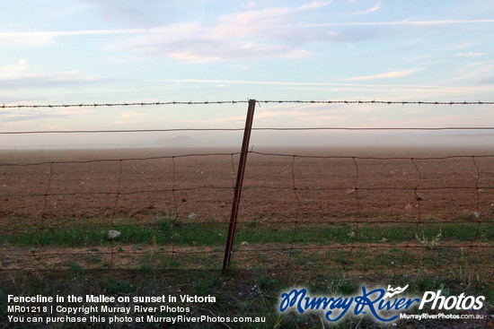 Fenceline in the Mallee on sunset in Victoria