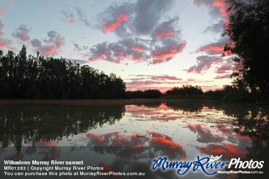 Wilkadene Murray River sunset