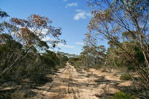 Big Desert State Forest, Victoria