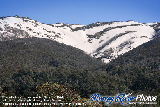 Snowfields of Kosciuszko National Park