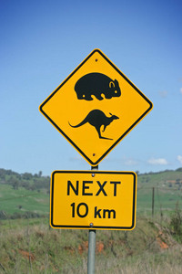 Wombats & Kangaroos sign ahead