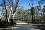 Gunbower Forest, Victoria