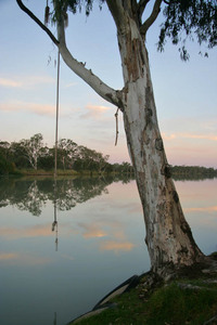 Tree swing at Moorook, South Australia
