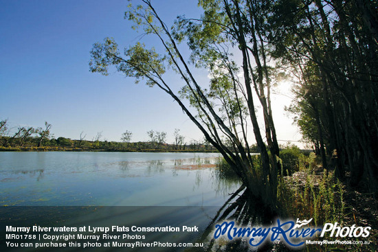 Murray River waters at Lyrup Flats Conservation Park