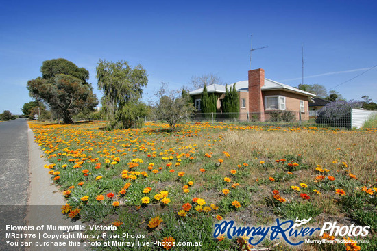 Flowers of Murrayville, Victoria