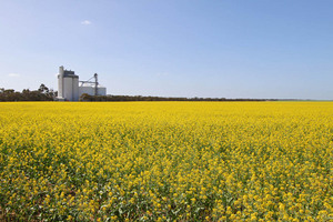 Geranium Canola fields, South Australia
