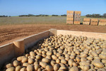 Pinnaroo potatoes, South Australia