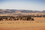 Landscape near Cambrai, South Australia