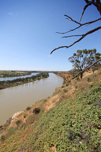 Murray River near Walker Flat