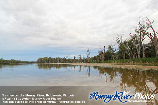 Sunrise on the Murray River, Robinvale, Victoria