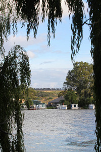 Milk boats at Mannum, Cowirra