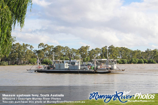 Mannum upstream ferry, South Australia