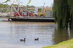 Mannum ferry and ducks