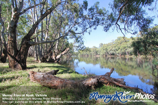 Murray River at Nyah, Victoria