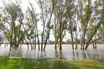 Loxton riverfront flooding, South Australia