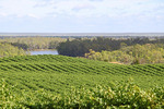 View across vineyards Murtho, Riverland