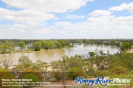 Murray River at Waikerie