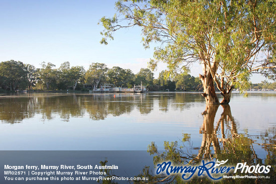 Morgan ferry, Murray River, South Australia