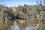 Murray River landscape near Swan Reach