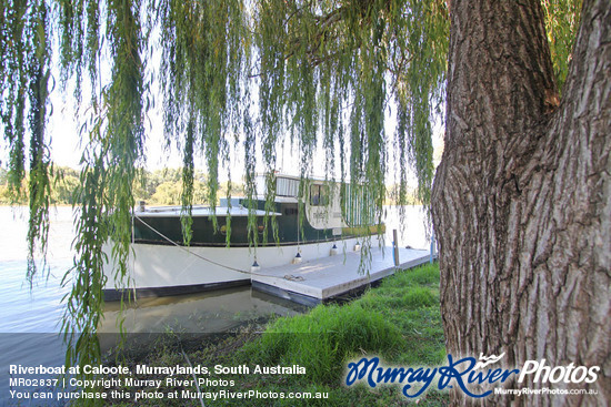 Riverboat at Caloote, Murraylands, South Australia