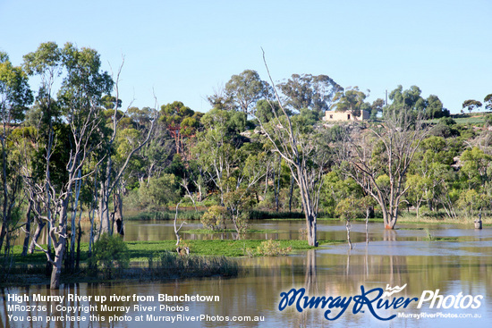 High Murray River up river from Blanchetown