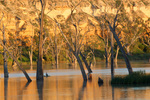 Murray River cliffs on sunrise at Blanchetown