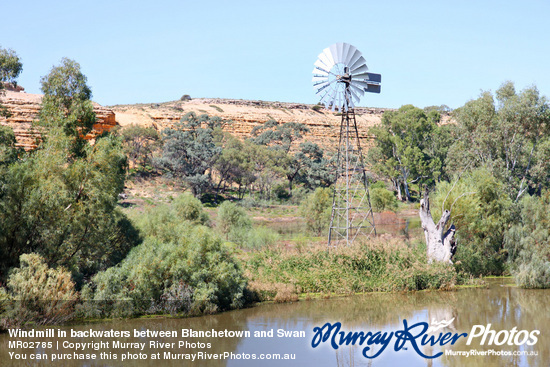 Windmill in backwaters between Blanchetown and Swan Reach