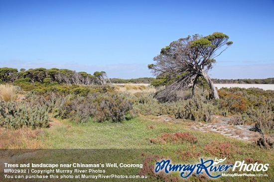 Trees and landscape near Chinaman's Well, Coorong