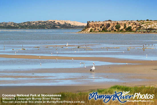 Coorong National Park at Noonameena