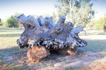 Large Mallee Stump at Pine Plains Lodge