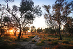 Sunrise at Pine Plains Lodge, Wyperfeld National Park