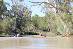 Tinny entering creek near Headings Cliffs, Riverland