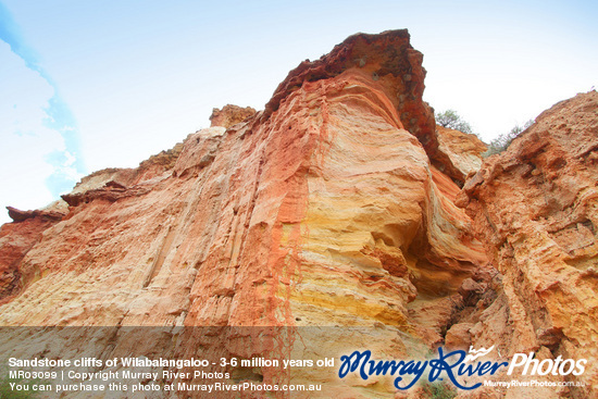 Sandstone cliffs of Wilabalangaloo - 3-6 million years old