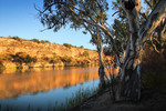 Maize Island Conservation Park, Waikerie