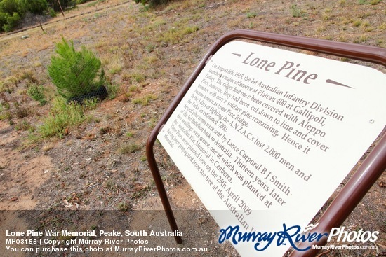Peake Lone Pine cutting - Peake (Mallee)